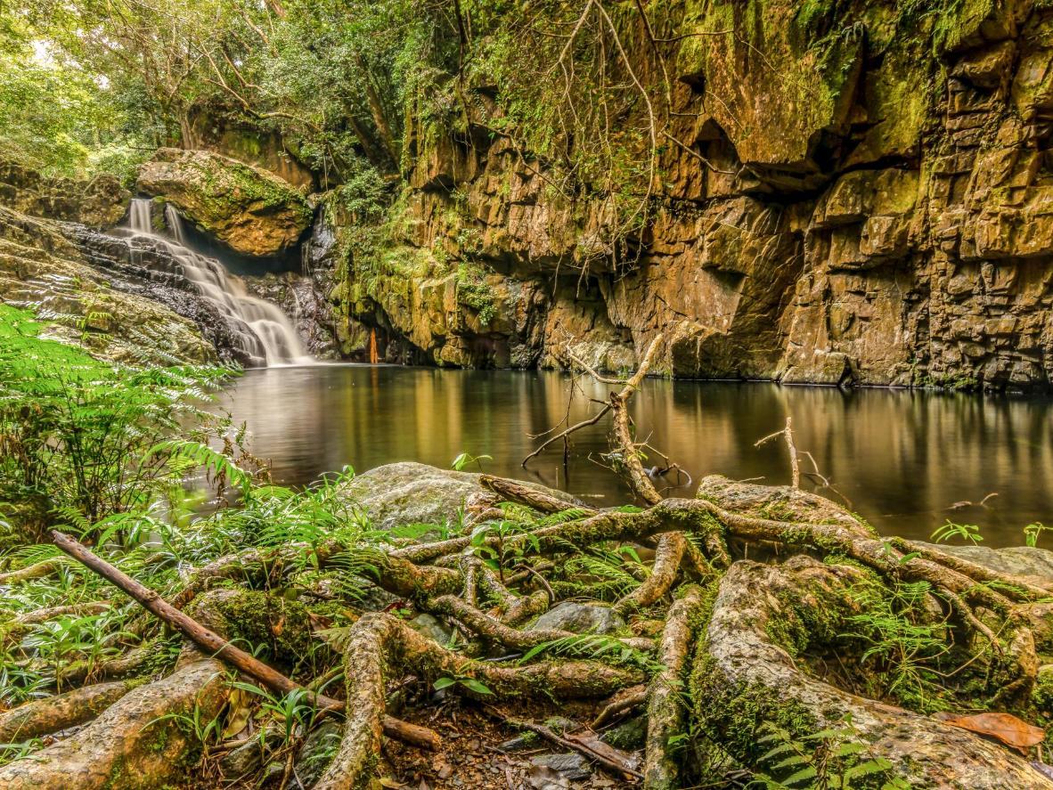 The verdant vegetation of the Daintree Rainforest
