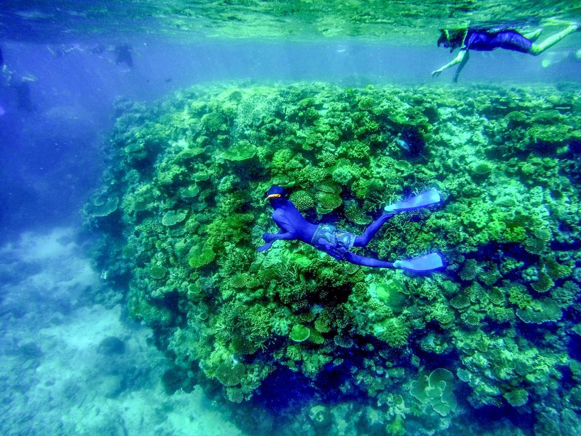 One of the world's great wonders, The Great Barrier Reef