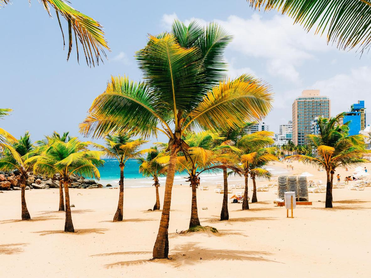 Tropical palms line the beachfront in San Juan's trendy Condado district