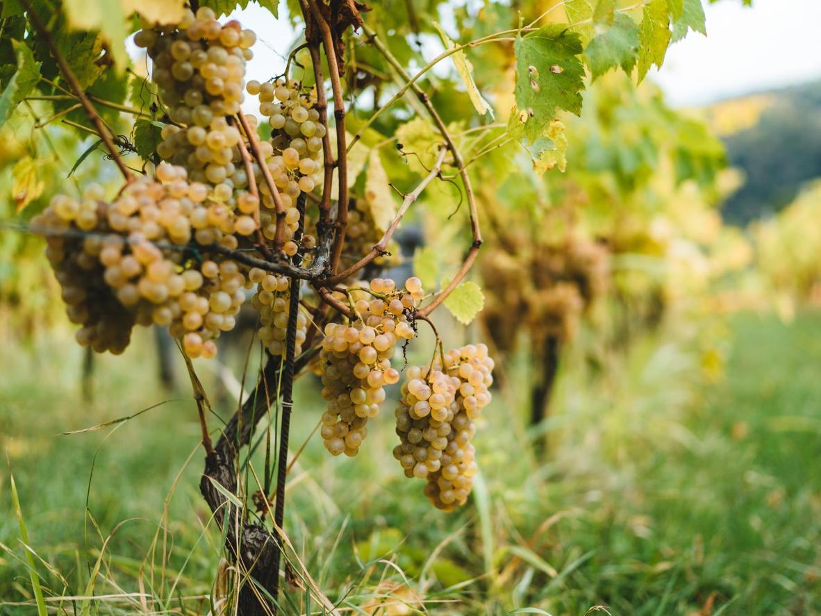 Texas Hill Country has produced many award-winning wines