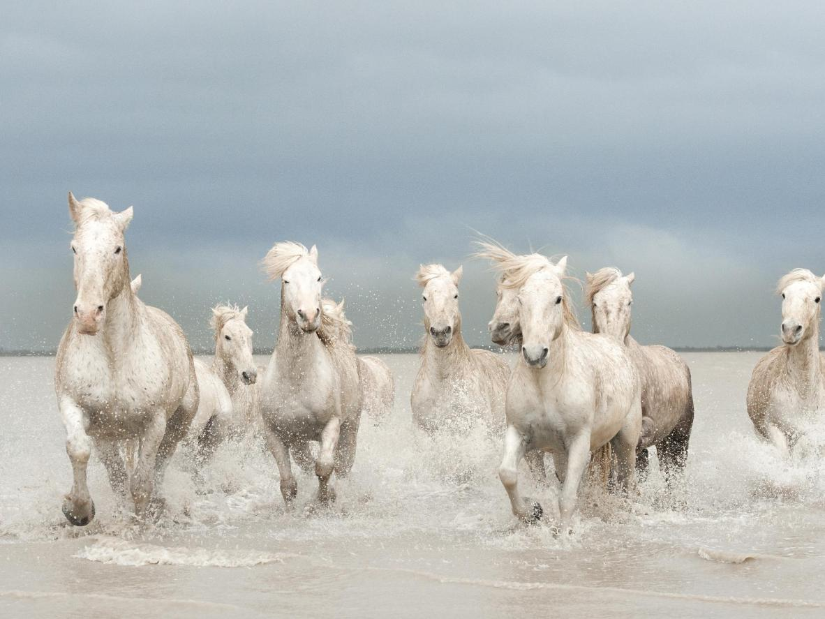 The region is famous for the indigenous white Camargue horses