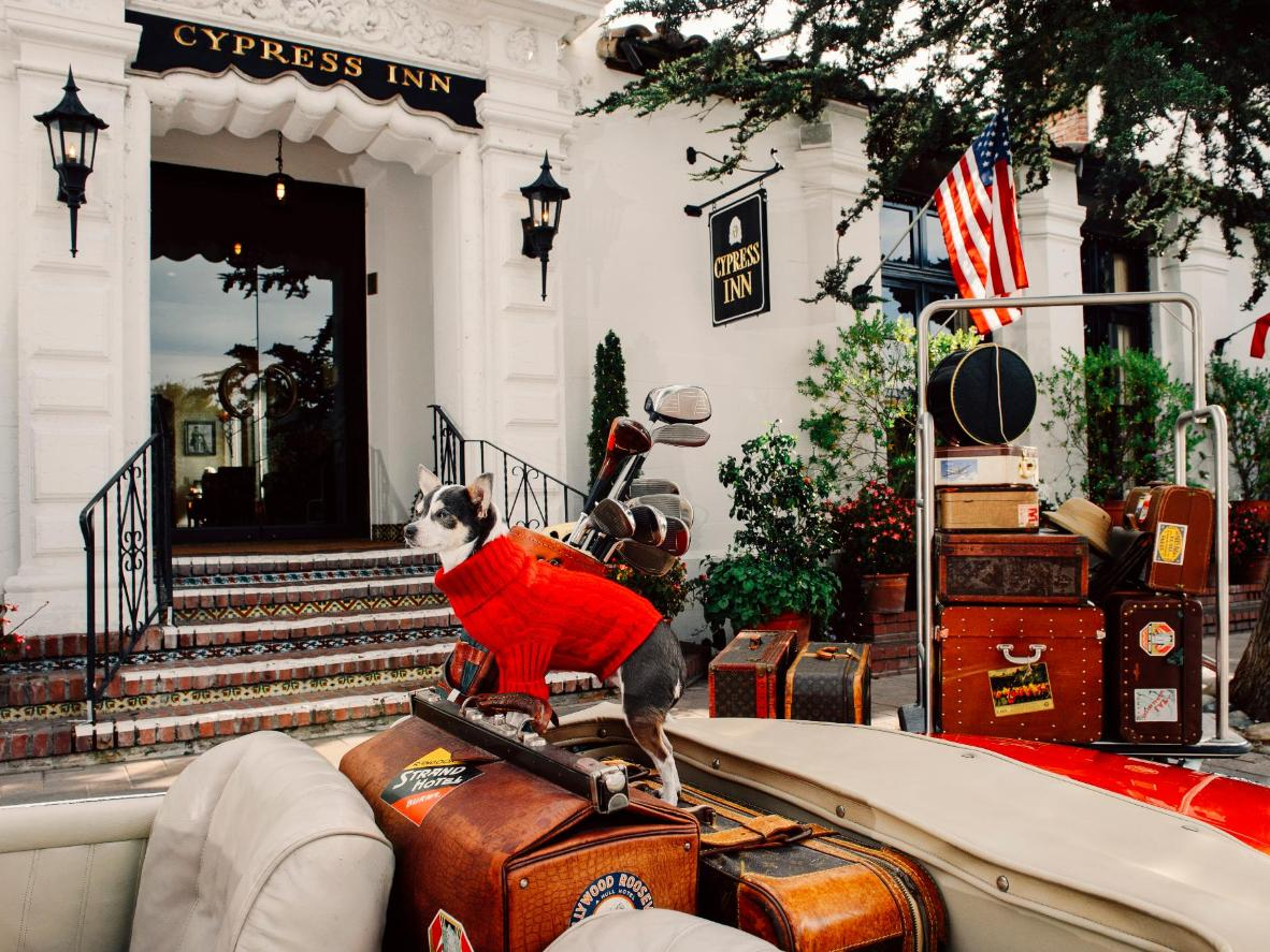 A number of accommodations in Carmel treat your dog like the VIP they are