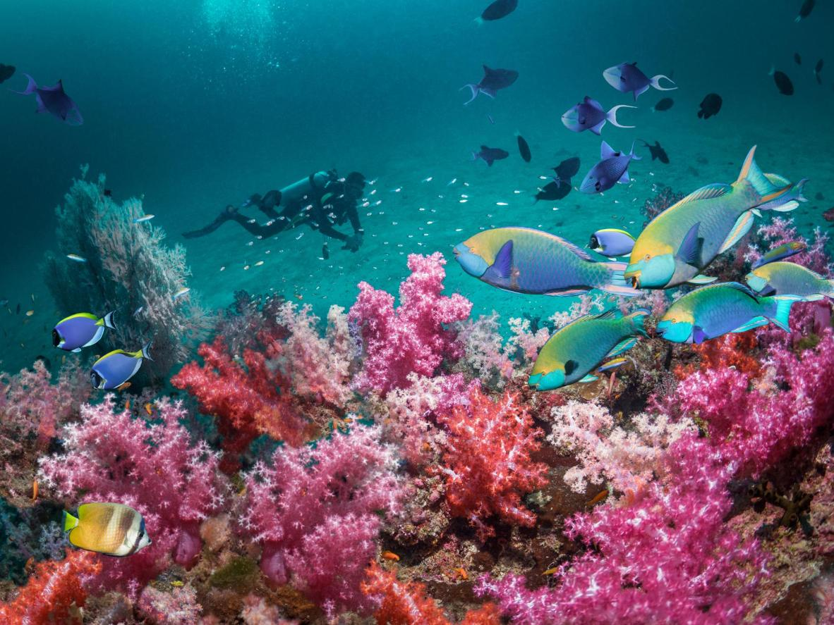 Rainbow-coloured fish and coral in the Andaman Sea, Thailand