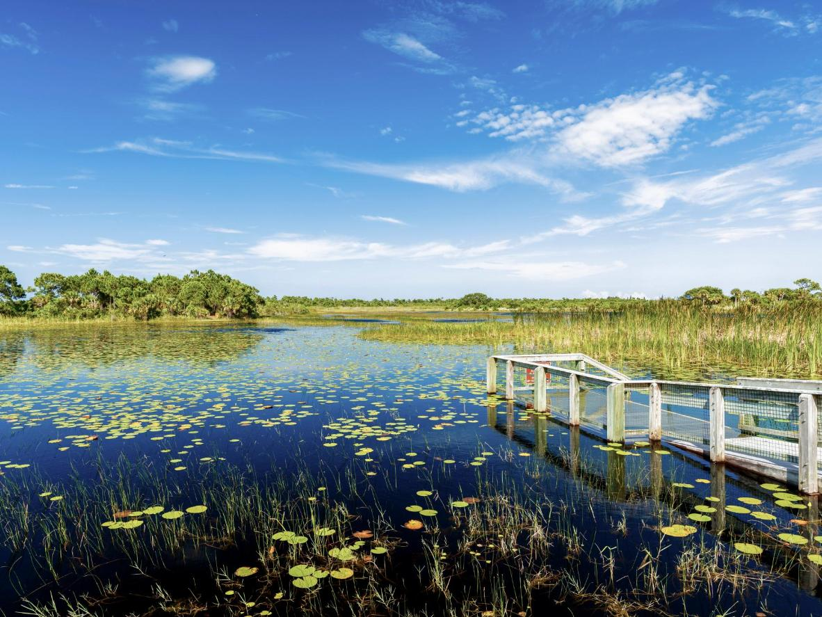 Bright blues and greens in the Everglades National Park