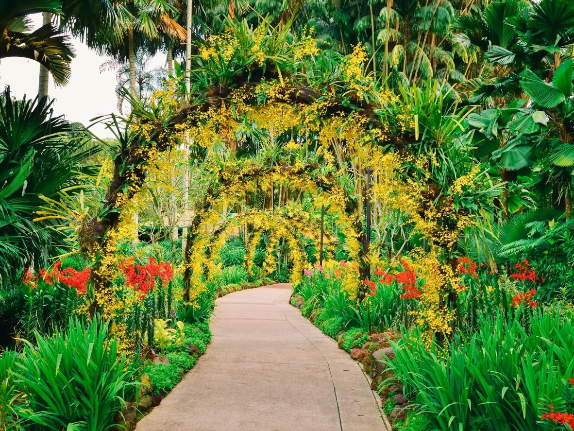 The world s most beautiful botanical gardens for Au jardin singapore botanic gardens