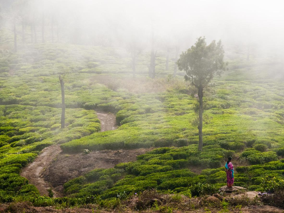Tea plantations near Haputale in Sri Lanka