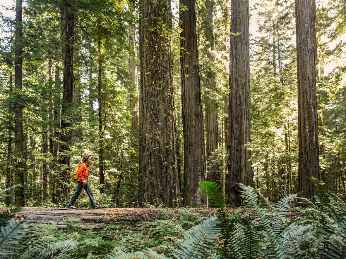 Redwood forests are dotted with hiking trails and hidden waterfalls