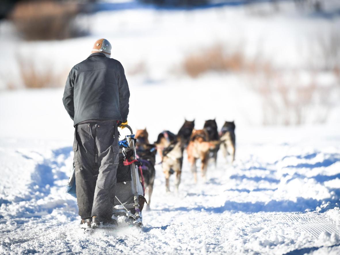 Dog sledfing for werewolf fans in Snowmass Village