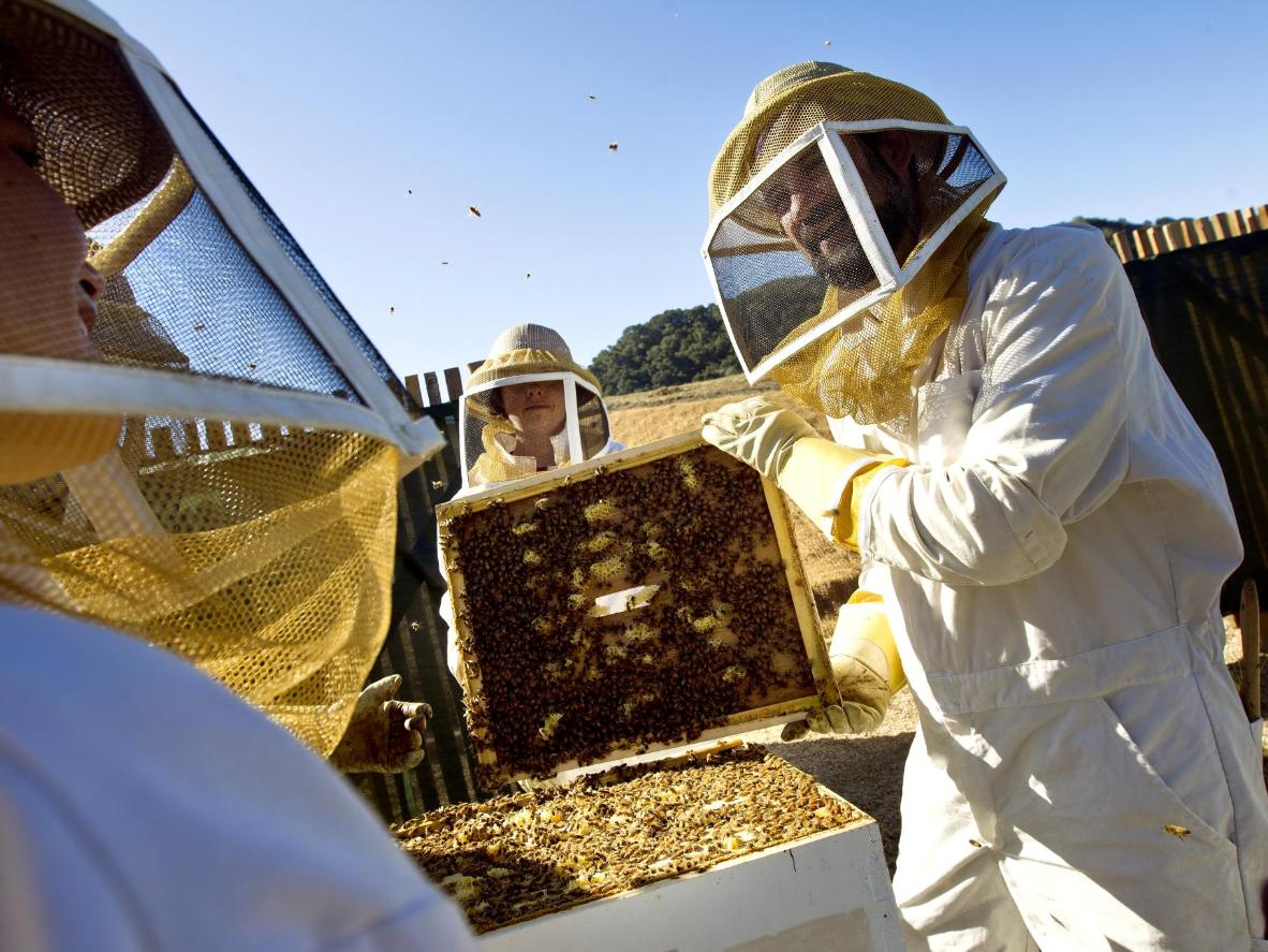 Carmel Valley Ranch the ranch is home to 60,000 Italian honey bees