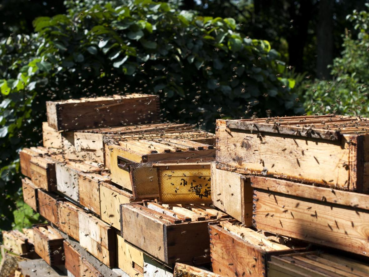 Slovenia is a nation of beekeepers