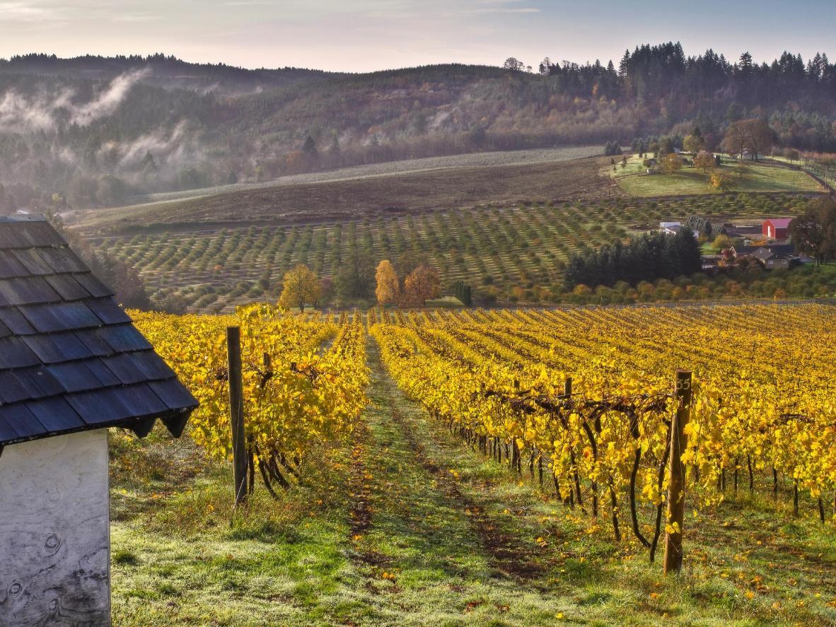 The Willamette Valley vineyards in Oregon
