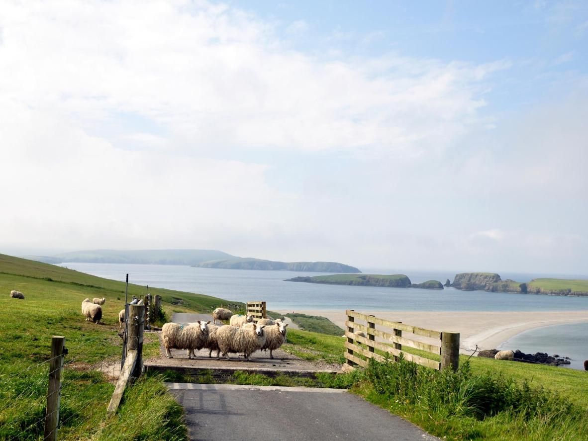 Hike the Shetland islands to see their Scandinavian heritage and tiny Shetland ponies