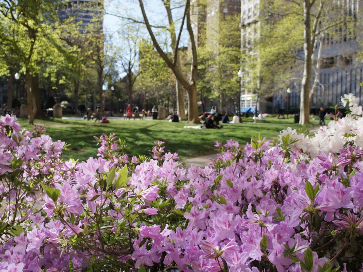 Philadelphia in the spring