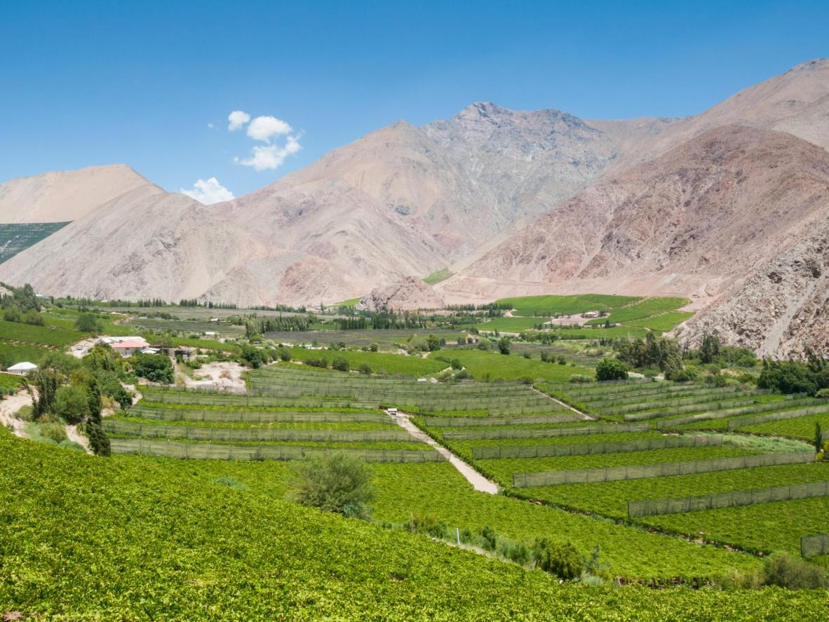 The vineyards of Elqui Valley