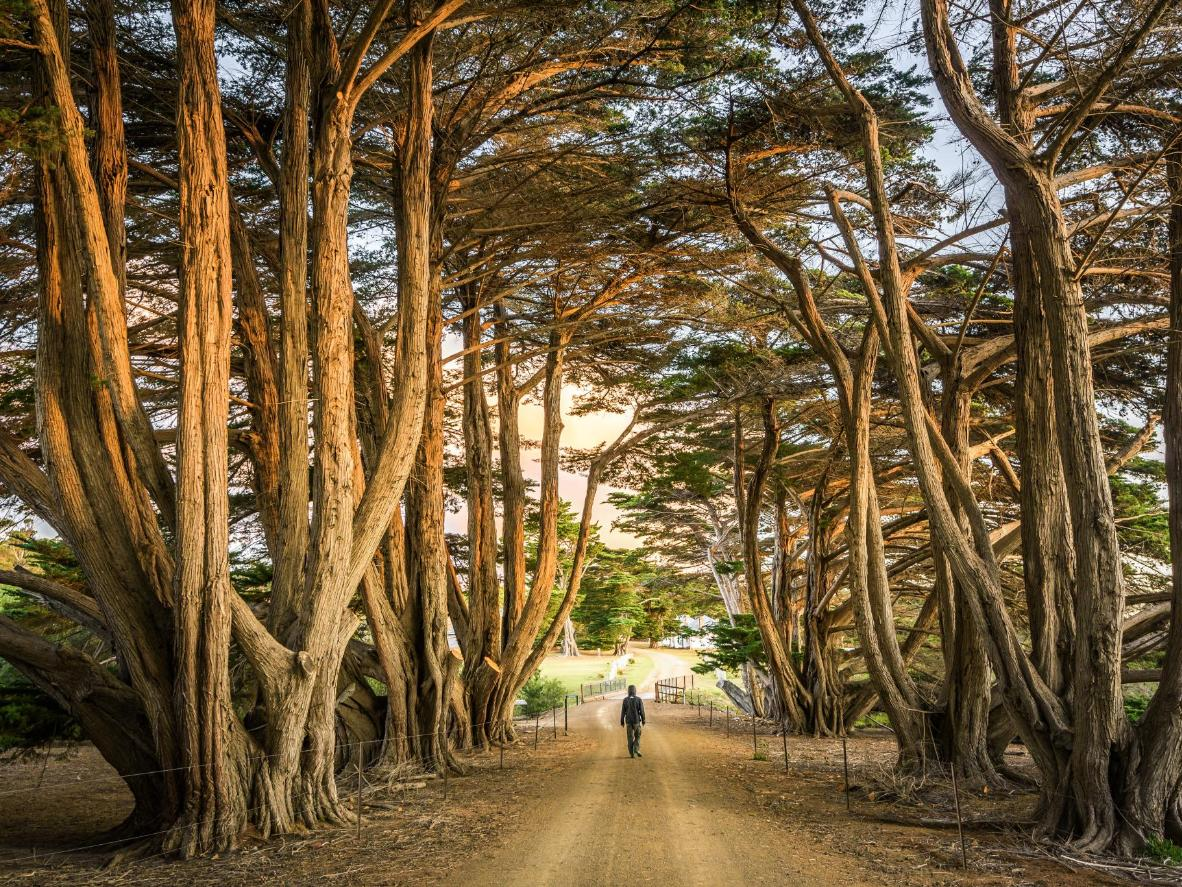 Gnarled trees and spectacular walkways capture the island's dramatic landscape