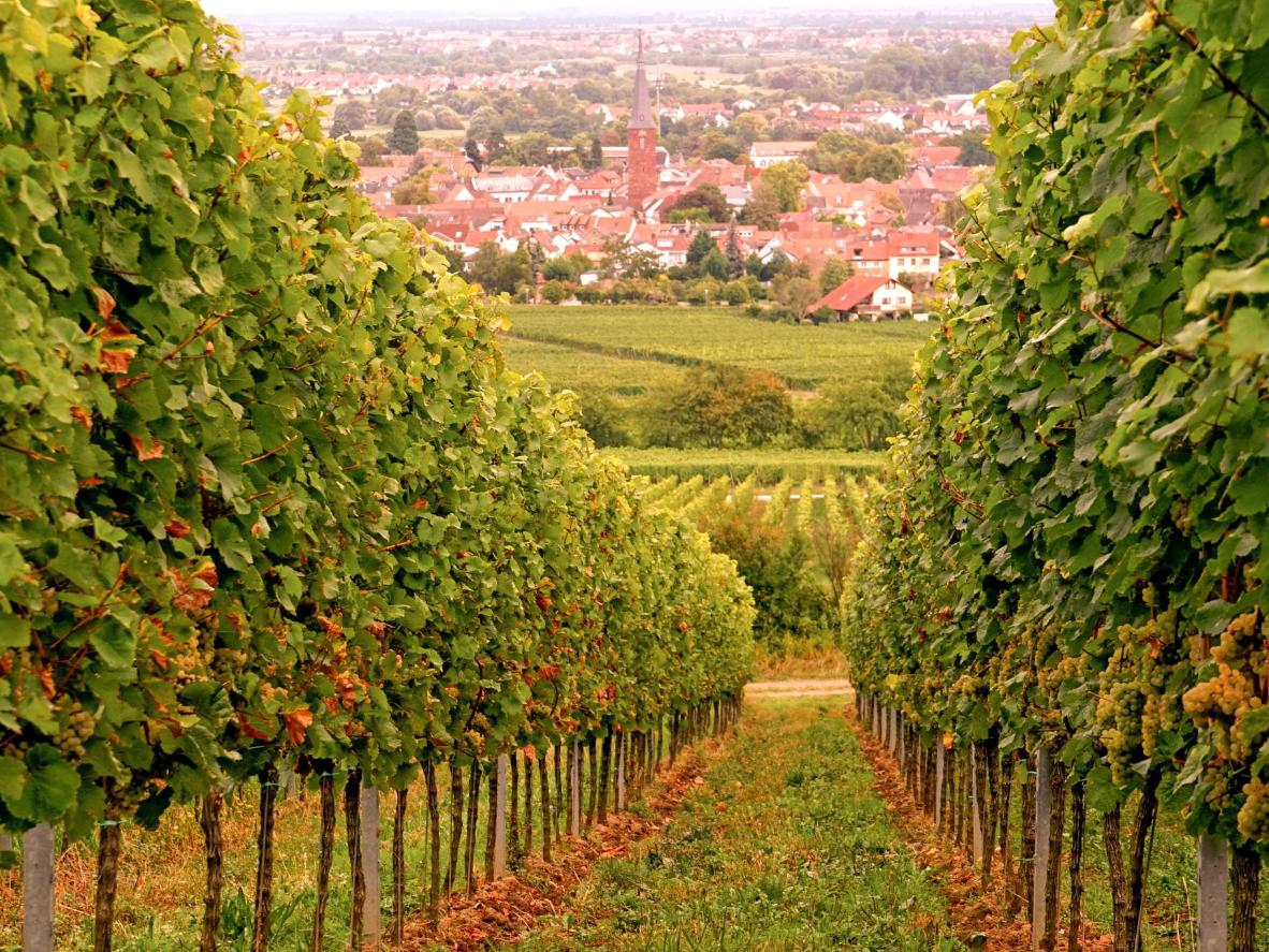 Visit the vineyards in Deidesheim as the leaves change colour