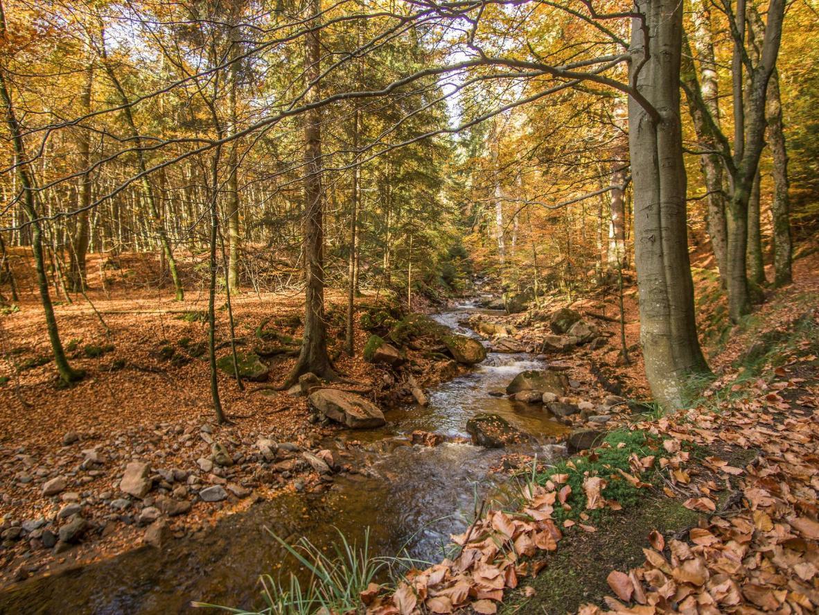 Explore the Harz National Park in Saxony-Anhalt
