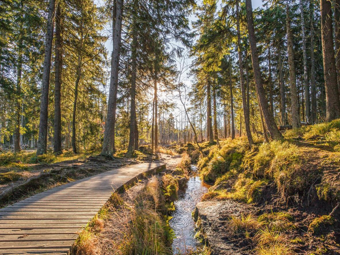 Hike through though the Dicke Tannen reserve, near Braunlage