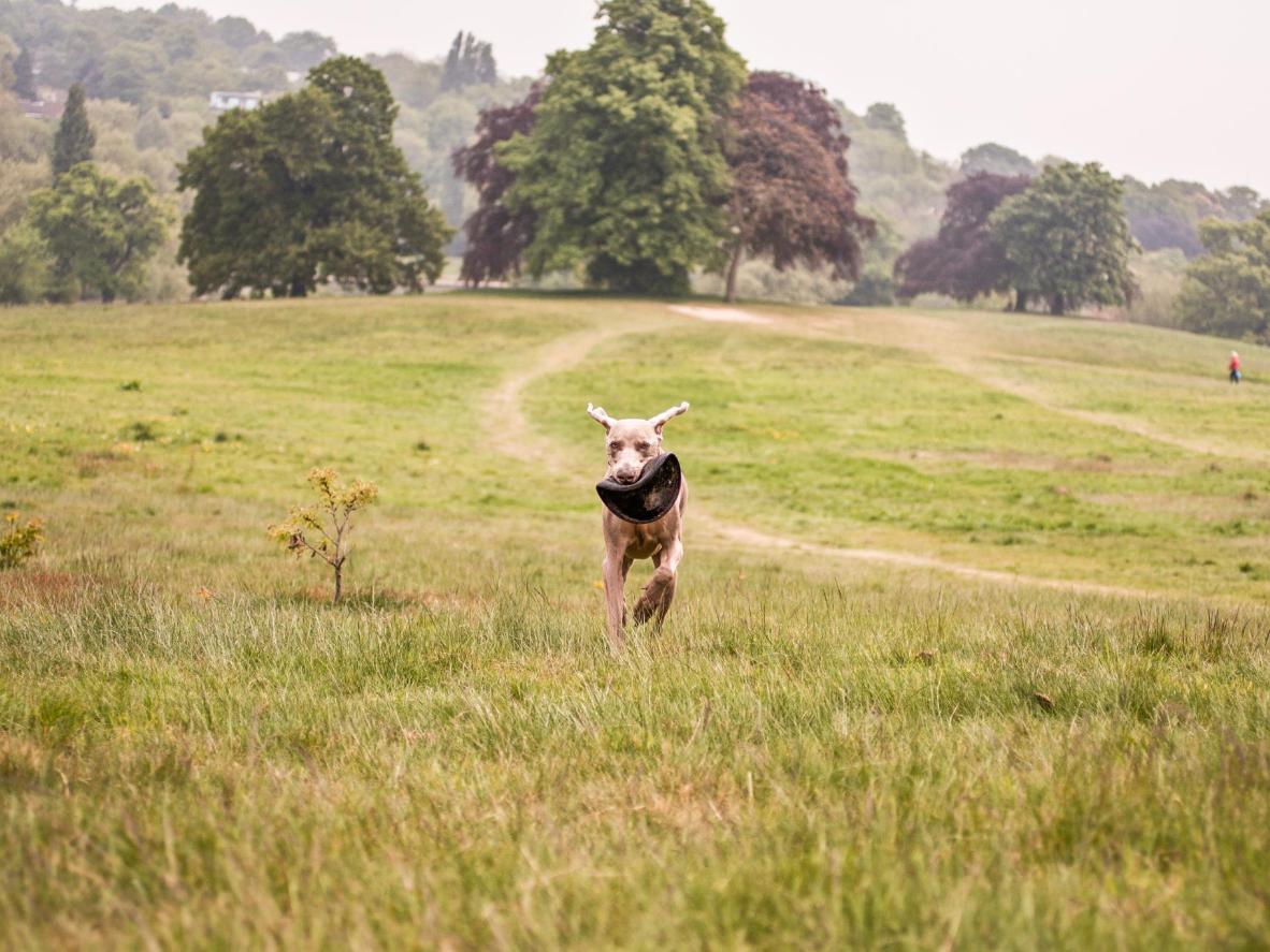 Hampstead Heath hat so einiges zu bieten für Ihren Hund