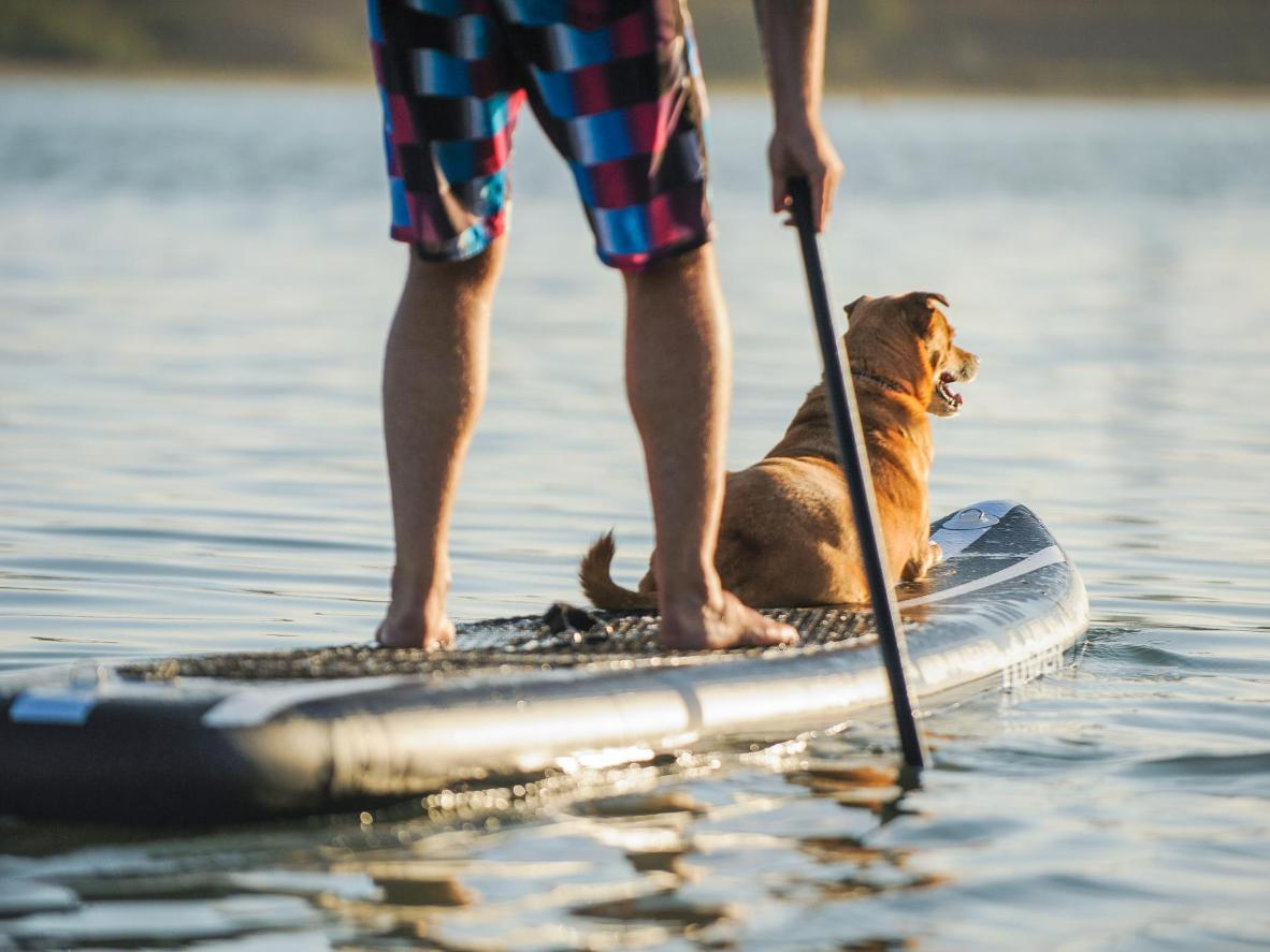 オークランドでは、愛するワンちゃんのためにボードを懸命に漕ごう
