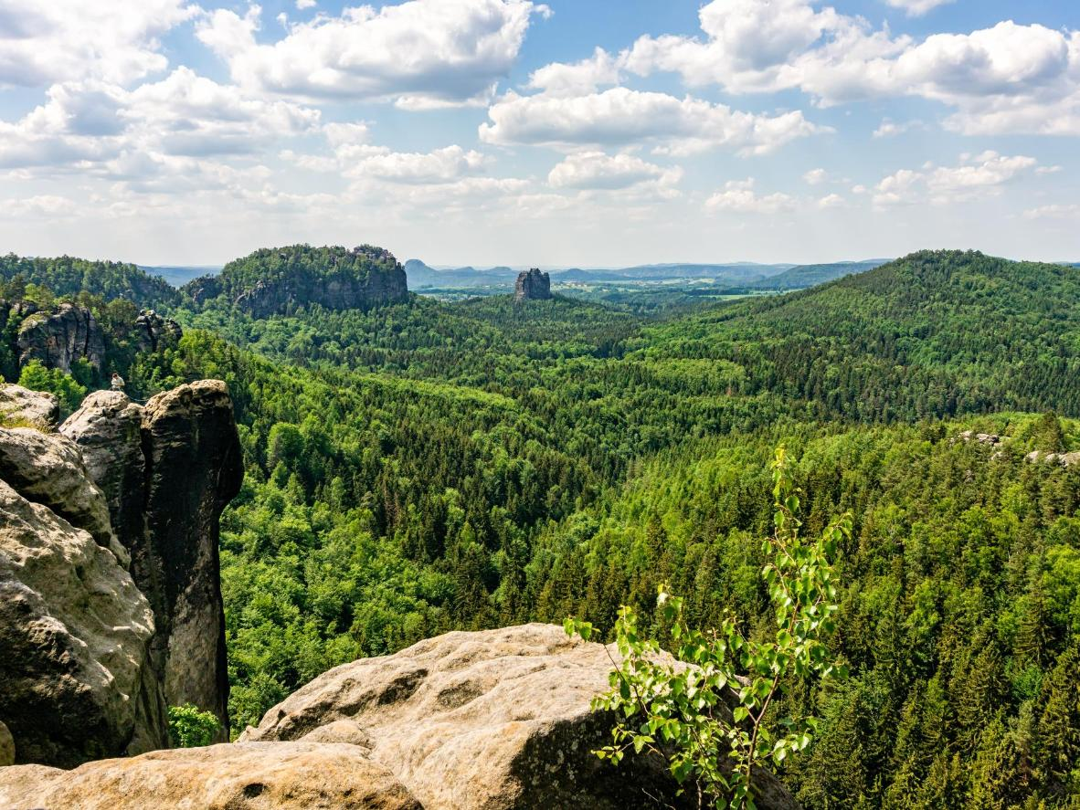 Deep green forest punctuated by limestone rock formations in the Saxon Switzerland National Park