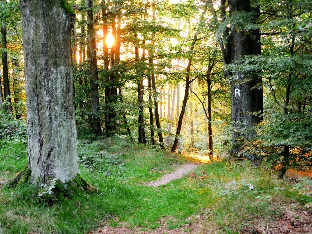 Virginal forest, peaceful meadows and valleys with crystal-clear natural springs on the Rennsteig trail