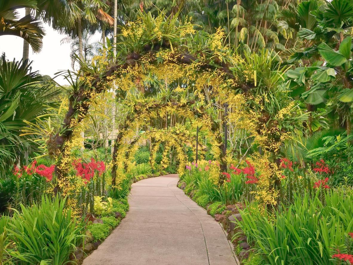 I Giardini Botanici di Singapore, con 10.000 specie di piante