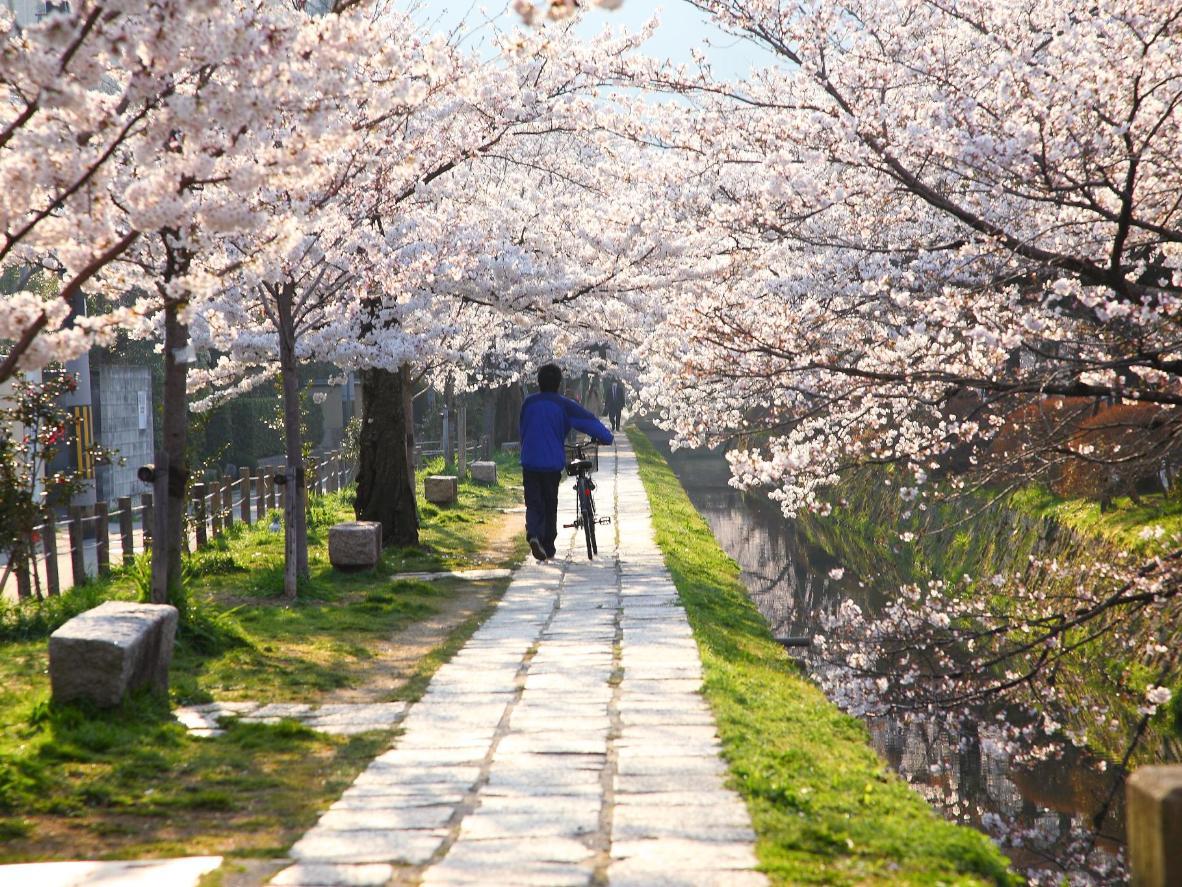 Jardins zen et cerisiers en fleurs forment un cadre idéal pour se détendre