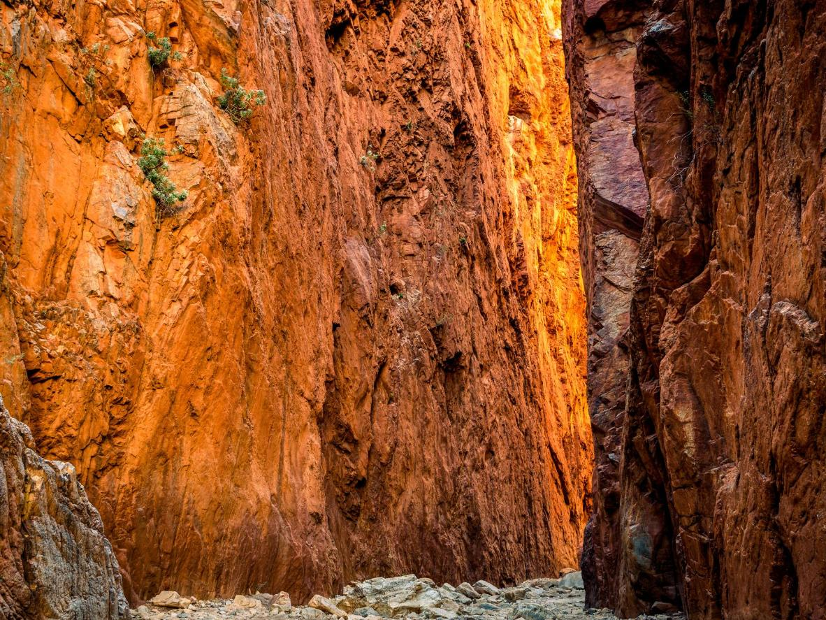 Follow the path through Standley Chasm (or 'Angkerle'), slicing through steep orange cliffs along the Larapinta Trail