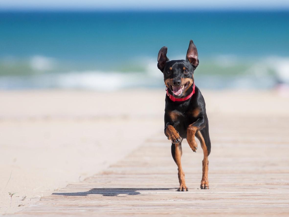 Olvídate de la correa en esta playa 100% para perros