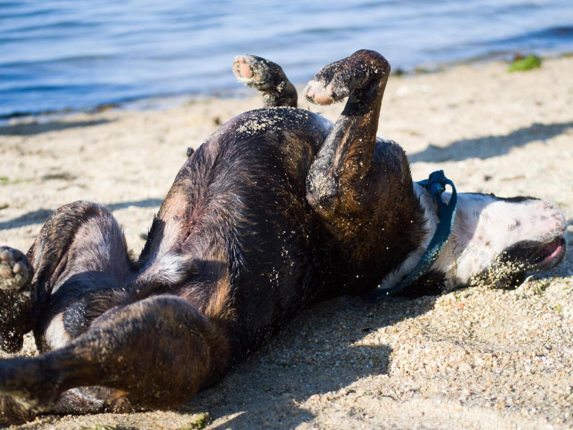 Playa del Espigón es donde llevan a sus perros los vecinos de la zona