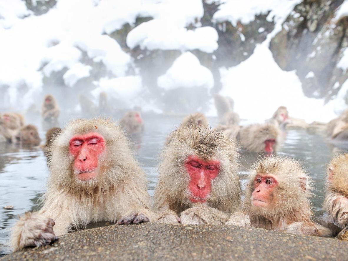 Diese Affen lieben lange Bäder
