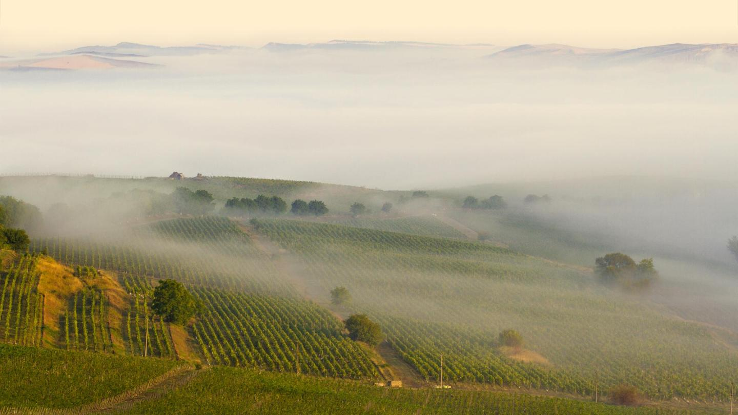 The Romanian wine industry is having a renaissance