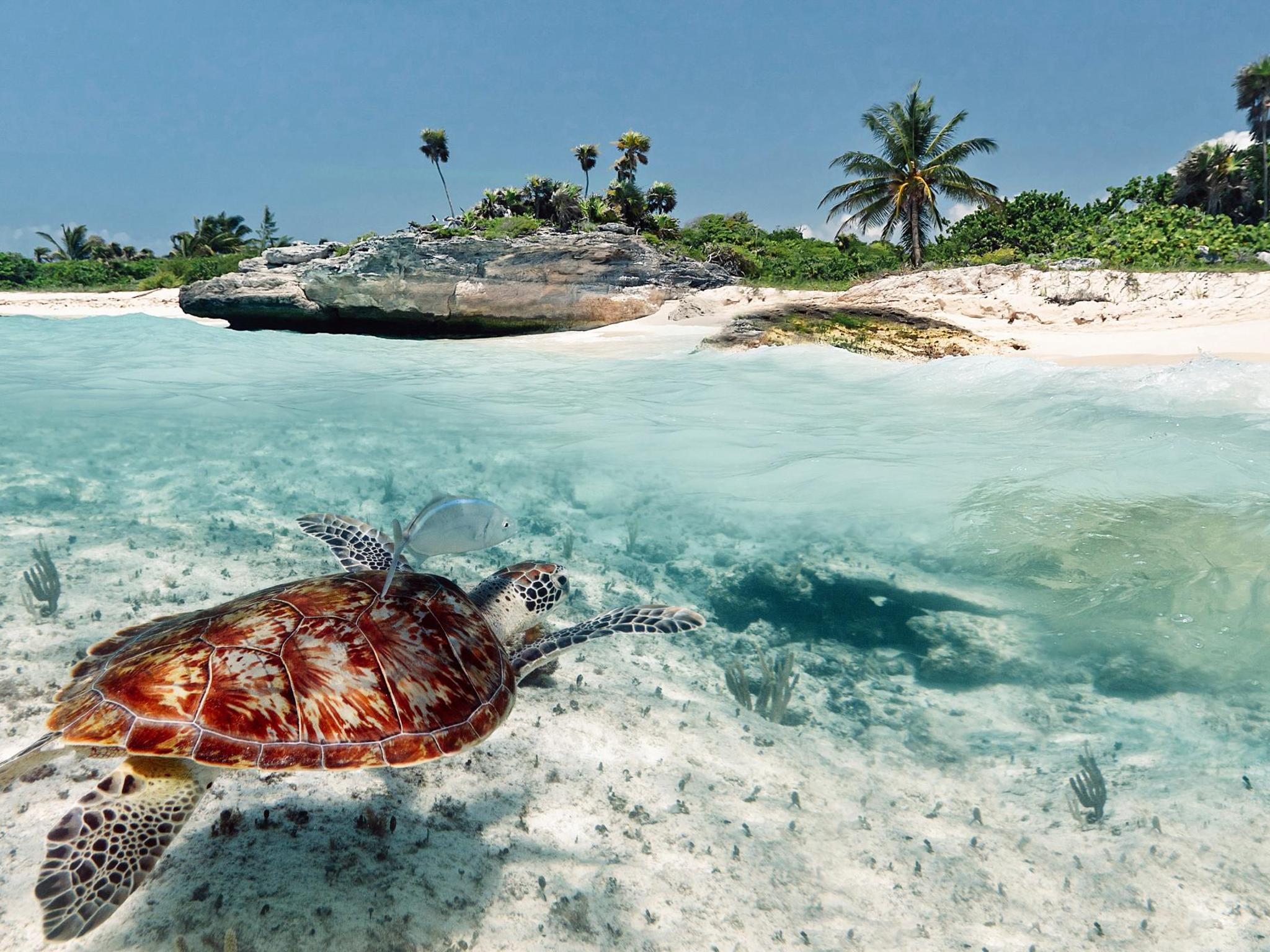 6 places to stay that help sea turtle conservation efforts