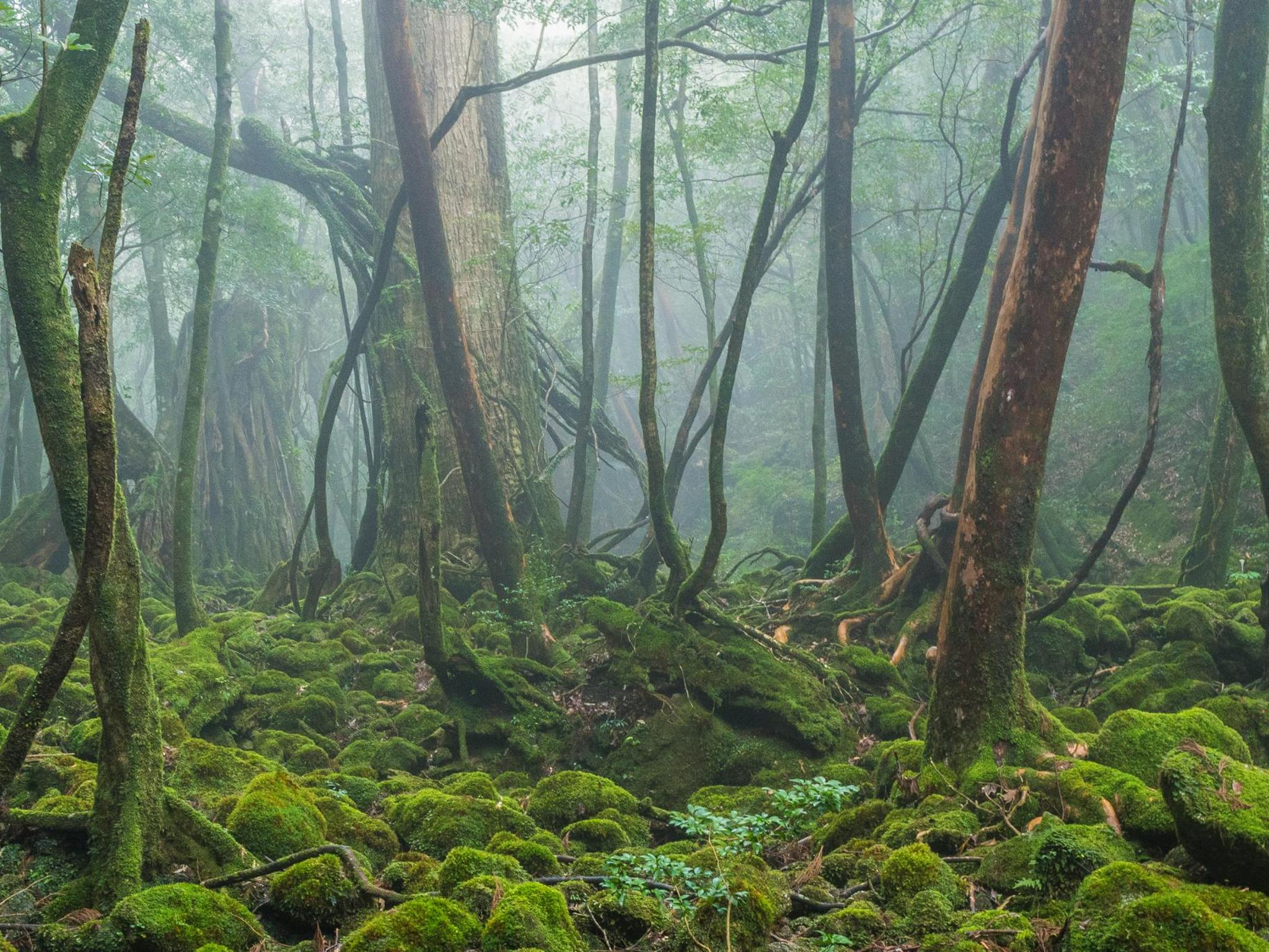 6 Amazing Ancient Forests