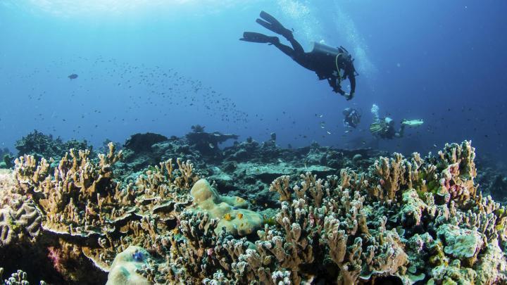 Encuentra el mejor lugar para el buceo en Islas Phi Phi