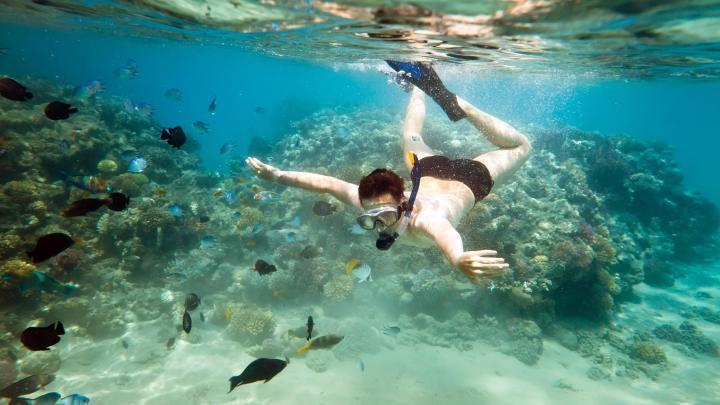 Encuentra el mejor lugar para el snorkel en Ko Tao