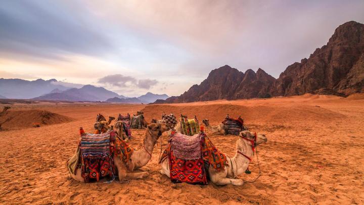 Encuentra el mejor lugar para los safaris en Sharm El-Sheikh