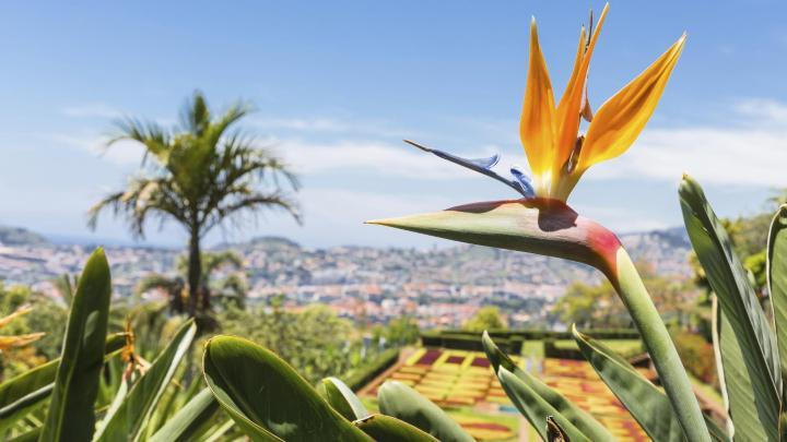 Encuentra el mejor lugar para la flores en Funchal