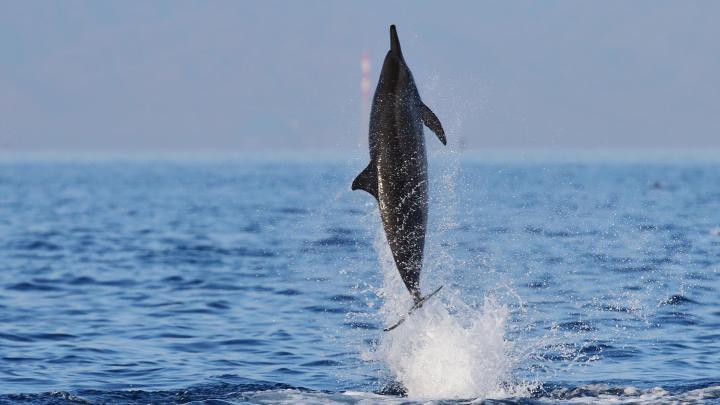 Encuentra el mejor lugar para ver delfines en Lovina