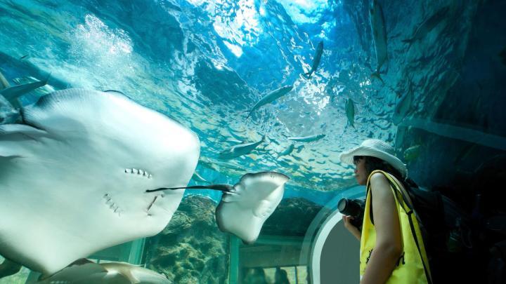 Encuentra el mejor lugar para los acuarios en La Rochelle