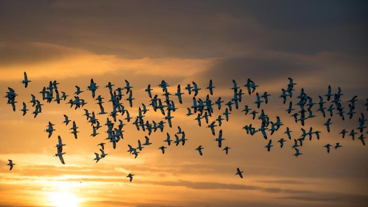 Encuentra el mejor lugar para observar aves en Hunstanton