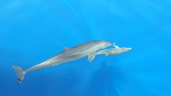 Encuentra el mejor lugar para ver delfines en Pipa