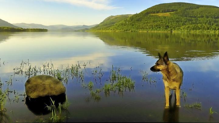 Encuentra el mejor lugar para viajar con mascotas en Keswick