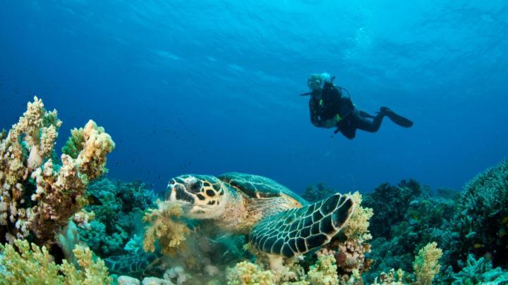 Encuentra el mejor lugar para bucear en arrecifes en Porto de Galinhas