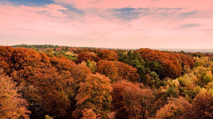 Encuentra el mejor lugar para los bosques bonitos en Garderen