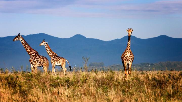Encuentra el mejor lugar para los safaris en Nairobi
