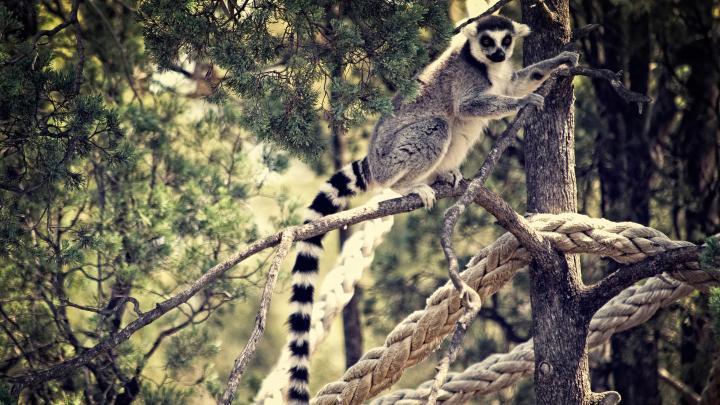 Encuentra el mejor lugar para los zoos en Dubbo