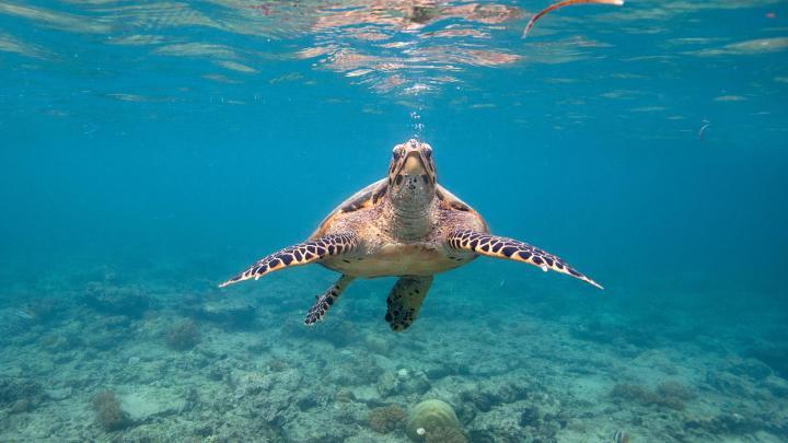 Encuentra el mejor lugar para el snorkel en Gili Air