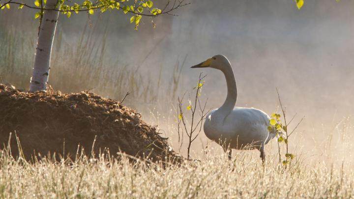 Encuentra el mejor lugar para la flora y fauna en Imatra